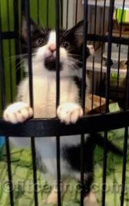 Adoptable kitten