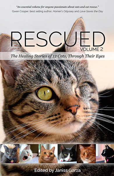 Rescued Healing Stories Of  Cats Through Their Eyes